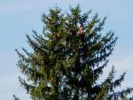 Lezení po stromech detail v koruně stromu