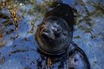 Tulení mláďata
