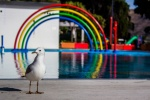 Seagull and a rainbow