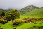 Kopce a ovce