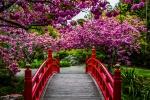 Zahrada v Oamaru
