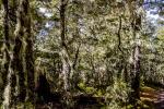 Stromy na Zélandu