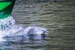 Delfín v Milford Sound