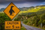 Pozor tučňáci