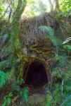 Obrostlý tunel na Západním pobřeží nedaleko Greymouth