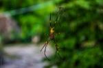 Mají tam celkem veliké pavouky